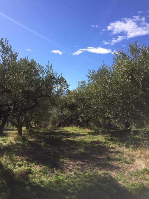 1511517451-olio-extravergine-di-oliva-abruzzese.jpg