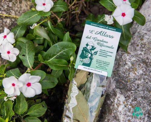 alloro-giardino-officinale-spezie-abruzzo-14.jpg