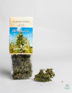 fiori-di-canapa-abruzzese-whiteville