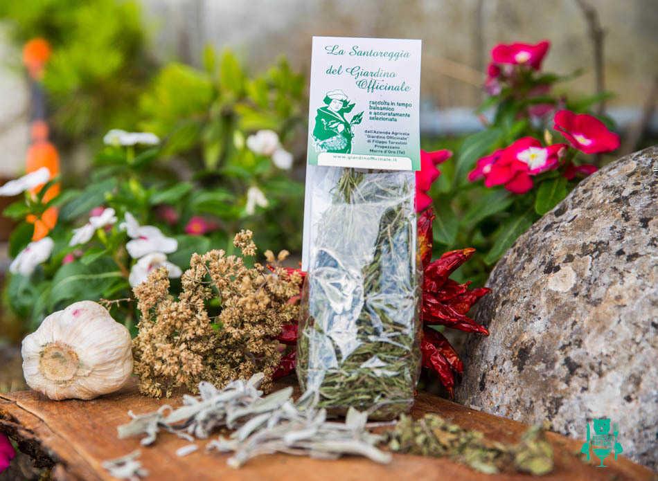 La santoreggia una pianta tante virtù