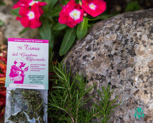 timo-giardino-officinale-spezie-abruzzo-10.jpg