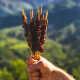 abruzzo-natural-prodotti-tipici-abruzzesi.jpg