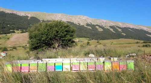 azienda-agricola-primavera--miele-e-tartufi-abruzzesi.jpg