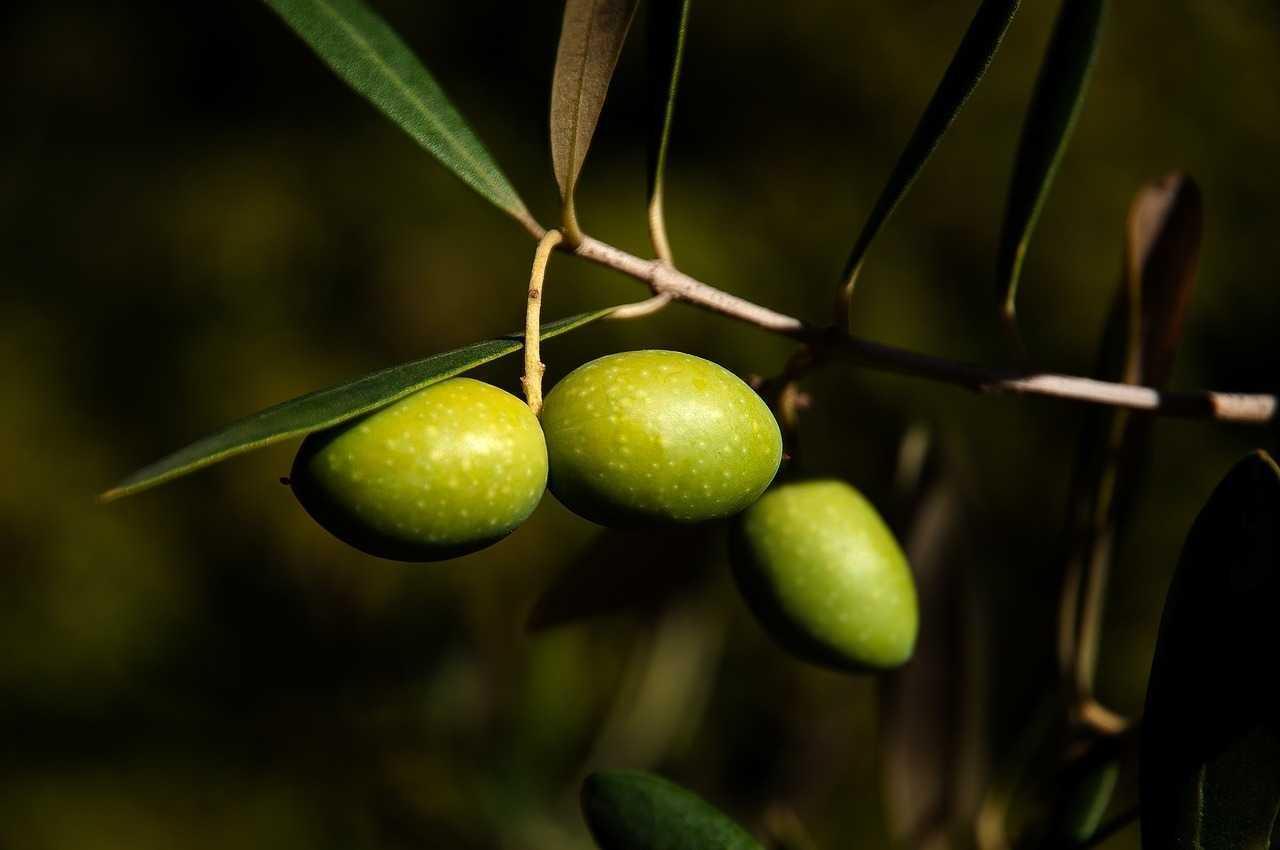 olio-extravergine-oliva-abruzzese.jpg