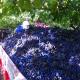 uva-vendemmia-vino-abruzzo-natural.jpg
